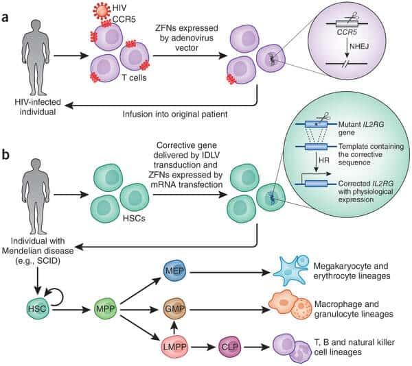 Gene-Editing-Therapies