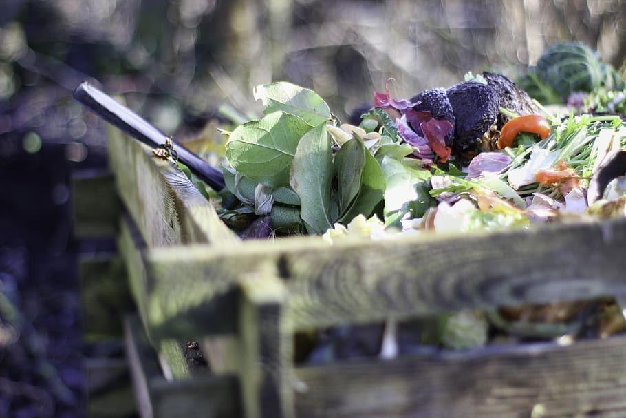 8 Effective Things to Fertilize Your Garden Like an Expert