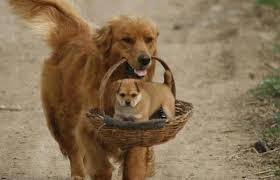 Puppy enjoying free ridewith mom