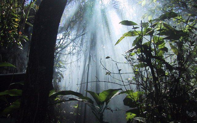 Honeymoon Romantic Jungle Safari